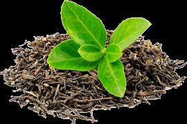 co je Herbal Tea